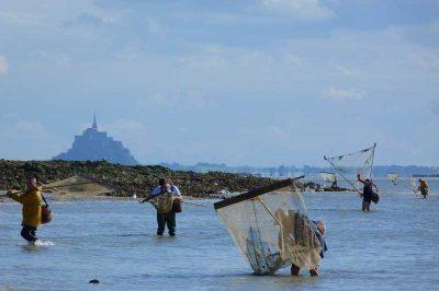 pêche à pied baie du mont-saint-michel